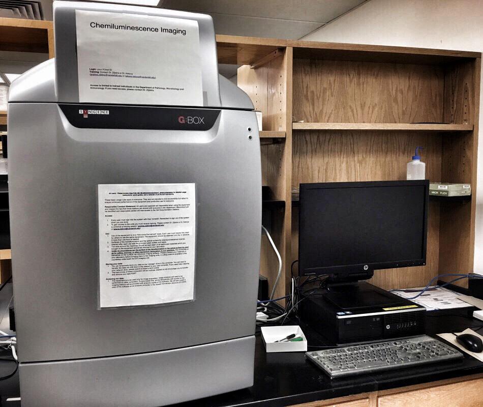Gel Documentation and Digital Imaging