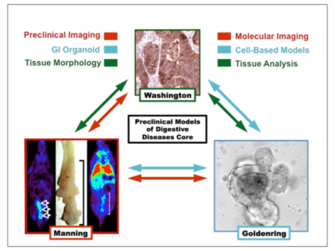 Preclinical Models of Digestive Disease Core