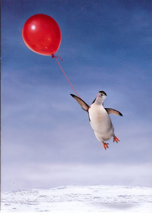 penguin holding onto string of floating balloon