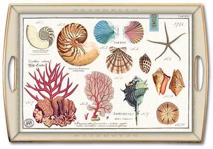 sea shells, designer tray